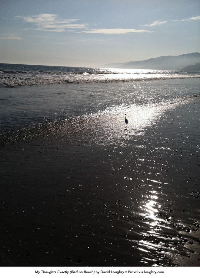 My Thoughts Exactly (Bird on Beach) by David Loughry. 07-05-2011. Proxri via loughry.com. 1200px tall.